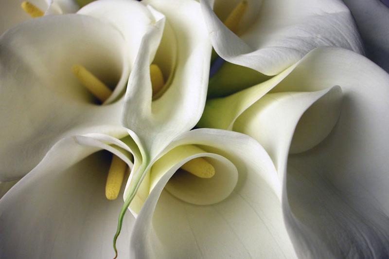 cornish-celebrants-funeral-5